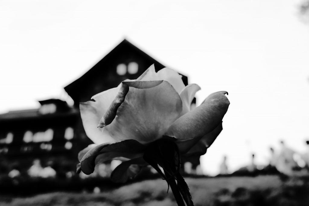旧古河庭園 薔薇 Rose