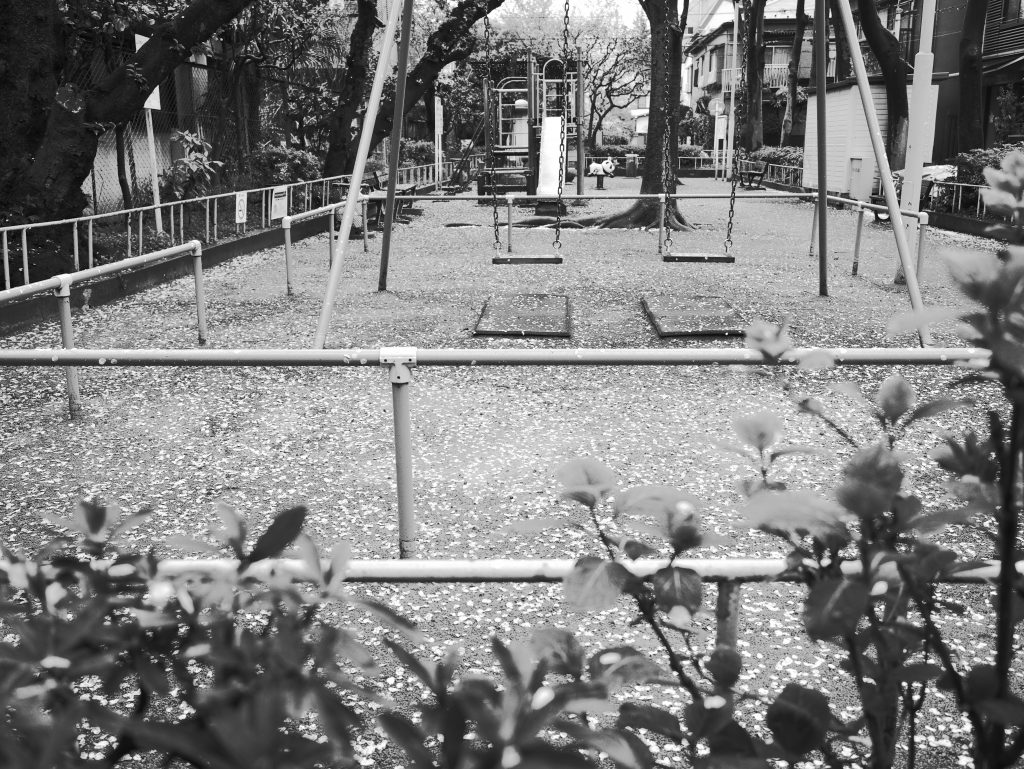 東京 根津 公園 桜