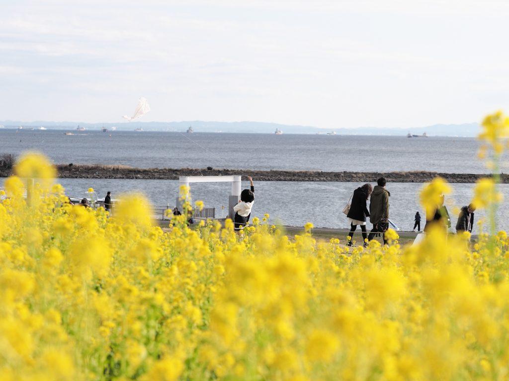 臨海公園 菜の花 凧揚げ 少女