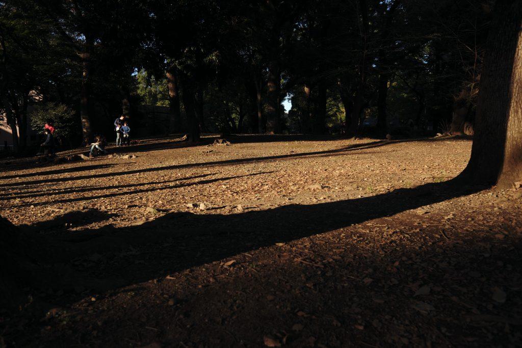 公園 木陰