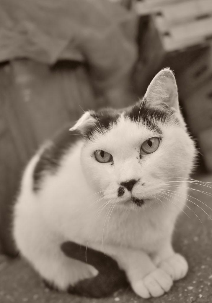 猫 ねこ ネコ 谷中