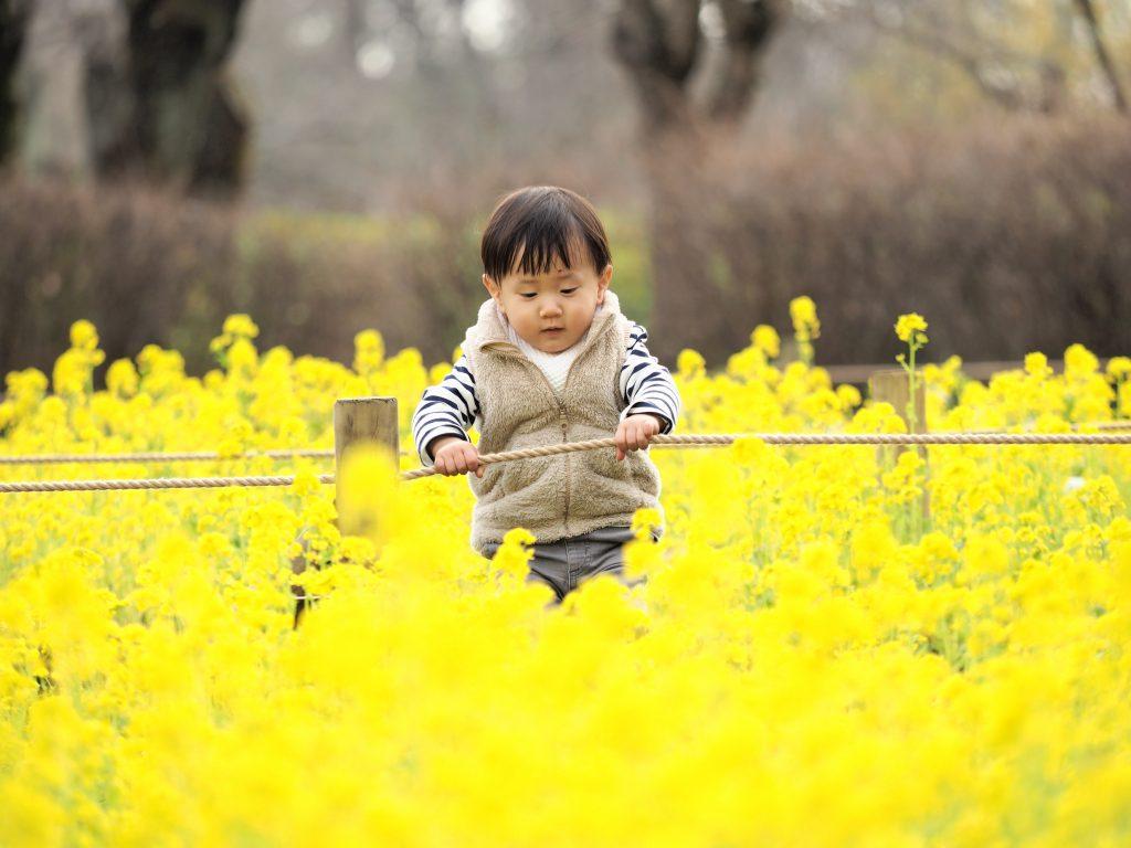 菜の花畑 子供 菜の花
