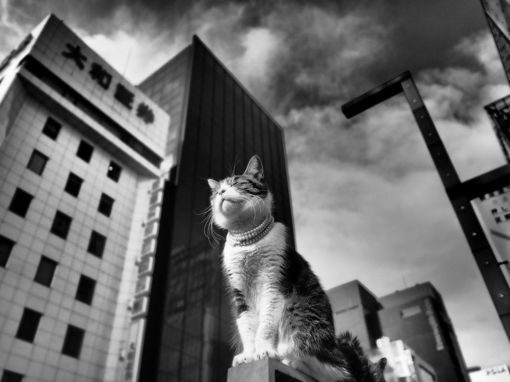 銀座 歩行者天国 猫