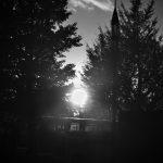 日暮れ時の木立
